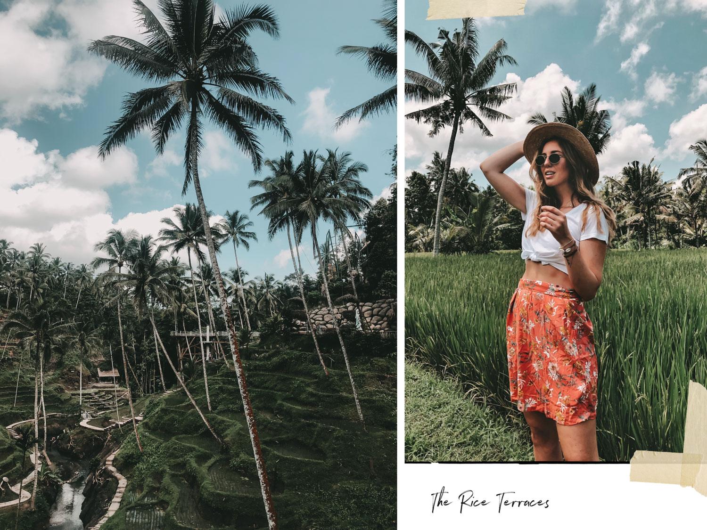 Reisterrassen-Bali